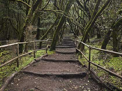 Parque Nacional de Garajonay. | Relato Olga Marqués Serrano